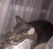 🐱 кот