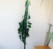 Цветок высокий и пышный