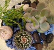 """Флорариум """"В голубом..."""" мини-садик кактус"""