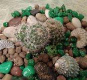 """Флорариум """"Зелёная пустыня"""" мини-садик кактус"""