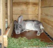 Тушка кролика