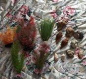 Для аквариума растения + ракушки