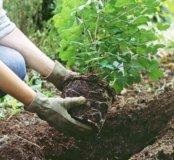 Посадки и озеленение участка