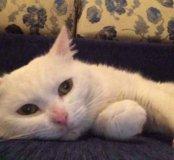 Сильвер - самый добрый котик