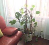 Большие цветы растения для дома или офиса