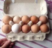 Дедушкины яйца