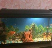 Аквариум(новый) вместе с рыбками