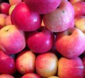 Яблочки КРАСНОДАРСКИЕ