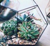 Флорариум (живые цветы)