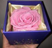 Подарок-сувенир! Роза не вянет 2 года!