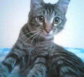 Котик 8 месяцев