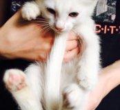 Белый котёнок с пятнышками