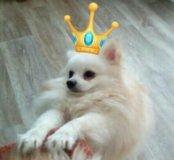 Вязка.Принц Арчи ищет Принцессу