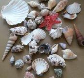 морские ракушки для интерьера
