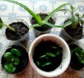 Продам или обмен на аквариумные растения