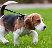 Выгуливаю животных