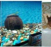 Коряги и домик для аквариума