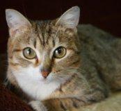 Кошка Келли