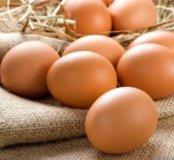 Домашнее куриное яйцо