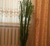 Комнатные цветы от 50 до 500р