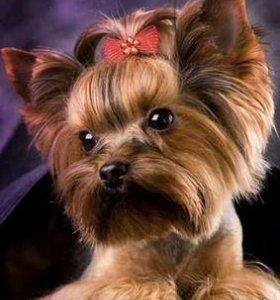Выездной груминг (стрижка) собак в Пензе