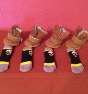 Ботиночки на песика + носочки