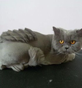 Профессиональная стрижка кошек