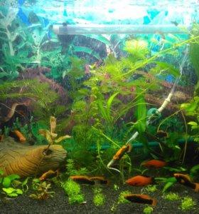 Рыба разная собственного разведения