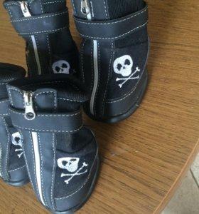 Обувь для собачки xxl