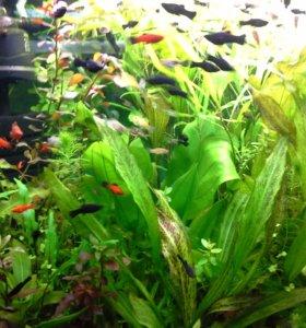 Живородящие рыбки и аквариумные растения!!!