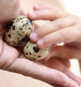 Диетическое перепелиное яйцо