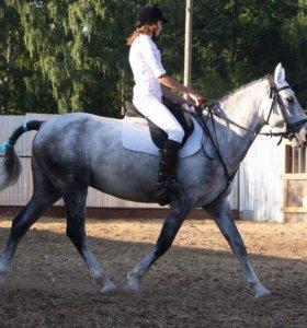Занятие конным спортом