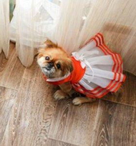 Платье для собачки 🐶👗
