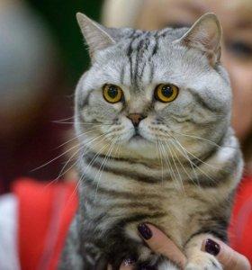 Котик приглашает на вязку