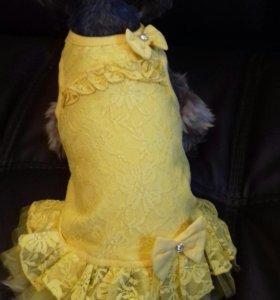 Красивые новые платья Леди
