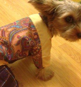 Одежда осенне/весенняя для маленьких собачек.