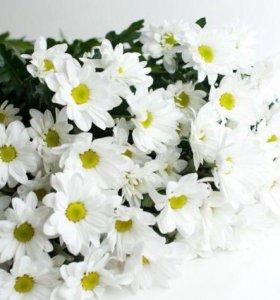 Хризантемы спб букет хризантем цветы