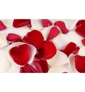 Лепестки роз лепестки роз на свадьбу