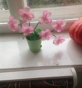 Орхидея бисер
