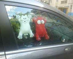Кот в авто