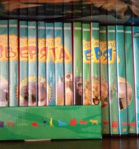Твои Весёлые Друзья Зверята! DVD диски