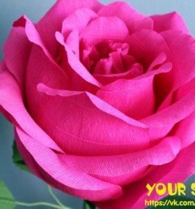 Гигантская сладкая роза