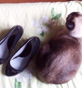 Туфли школьные ARZO