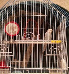 Попугай вместе с домиком