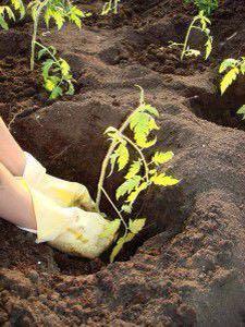 Песок глина чернозём щебень