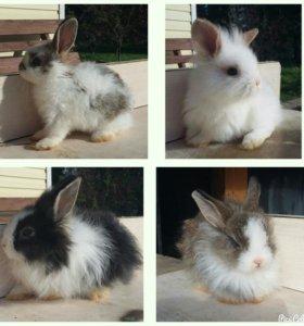 Крольчата )))