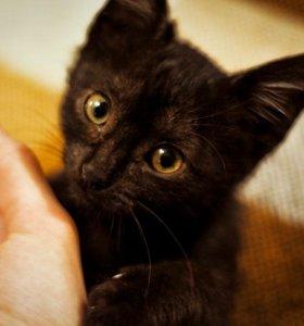 Котенок (девочка) Лесси