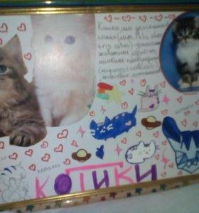 Коллаж на тему котики
