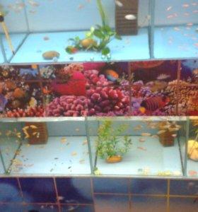 Мирные рыбы