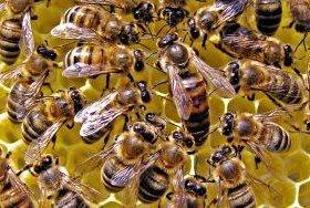 Мед из Тамбова